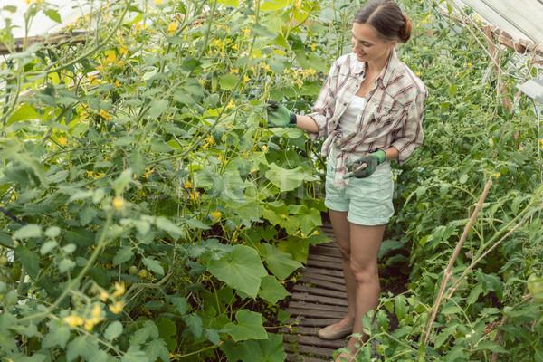 Woman working in garden green house Stock photo © Kzenon