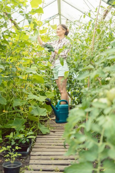 Gardening woman watering tomatoes Stock photo © Kzenon