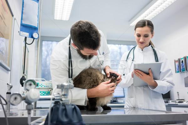 Vet Doctors examining cat patient with stethoscope Stock photo © Kzenon