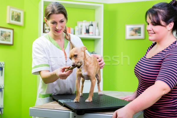Cão veterinário verificar para cima osso conforto Foto stock © Kzenon