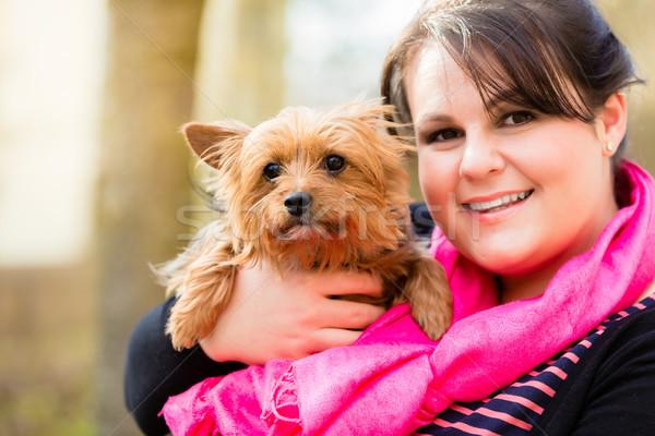 Yorkshire terrier braccio cane mama cute Foto d'archivio © Kzenon
