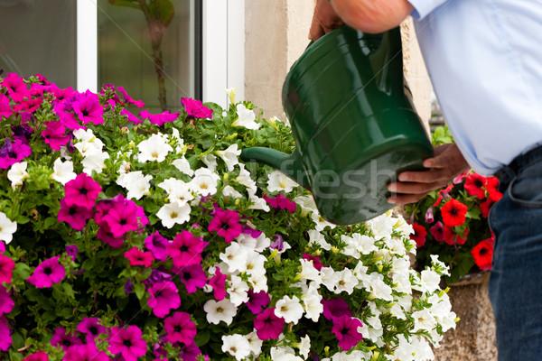 man is watering flowers Stock photo © Kzenon