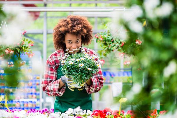 Stockfoto: Toegewijd · vrouw · werk · bloemist