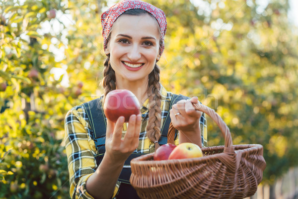 Farmer woman in fruit orchard holding apple in her hands Stock photo © Kzenon