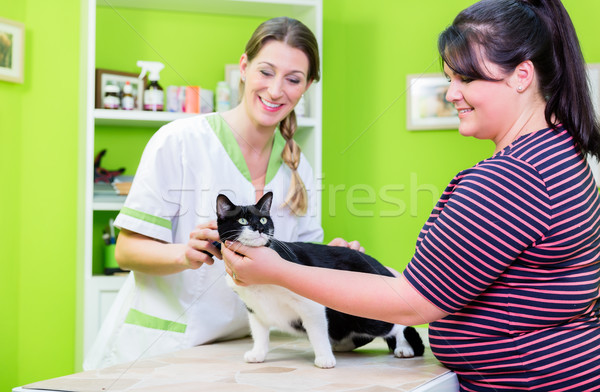 Cat at veterinarian or pet parlour Stock photo © Kzenon