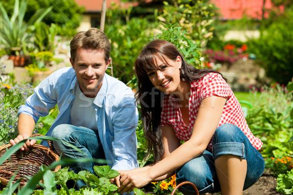 Jardinería verano Pareja cosecha feliz mujer Foto stock © Kzenon