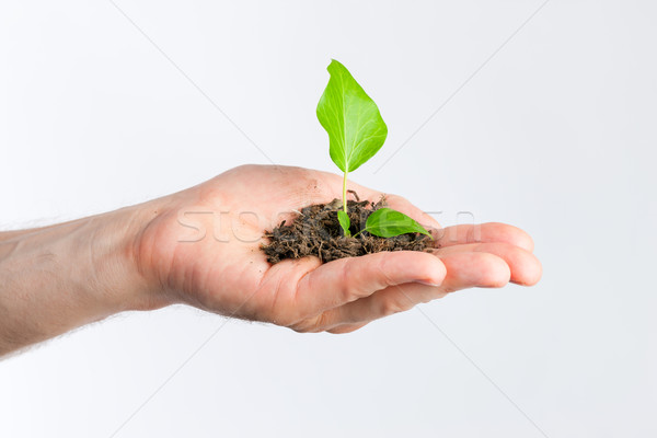 Man holding seedling in his hands Stock photo © Kzenon