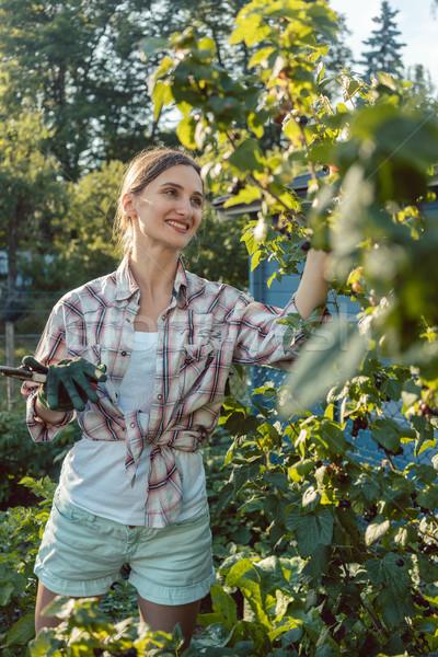 Jeune femme jardinage baies Bush été travaux Photo stock © Kzenon