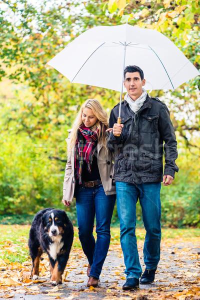 Photo stock: Femme · homme · marche · chien · automne · pluie