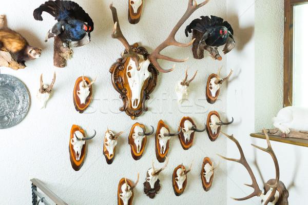 Raccolta trofei cabina muro diverso Foto d'archivio © Kzenon