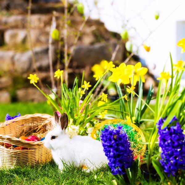 Conejo de Pascua pradera cesta huevos vida primavera Foto stock © Kzenon