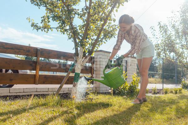 Nő kert locsol gyümölcsfa konzerv munka Stock fotó © Kzenon