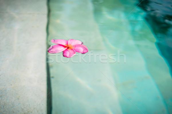 Flor flutuante piscina verão plantas rosa Foto stock © Kzenon