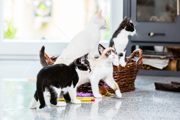Cute kittens looking with curiosity Stock photo © Kzenon