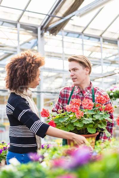Beautiful woman buying a red pelargonium at the advice of a florist Stock photo © Kzenon