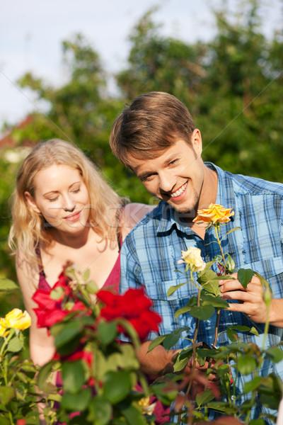 Jardin jardinage travaux roses couple lit de fleurs Photo stock © Kzenon