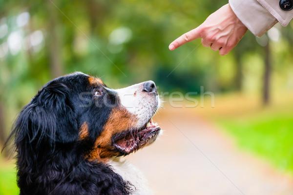 Kobieta szkolenia psa siedzieć komenda posłuszeństwo Zdjęcia stock © Kzenon