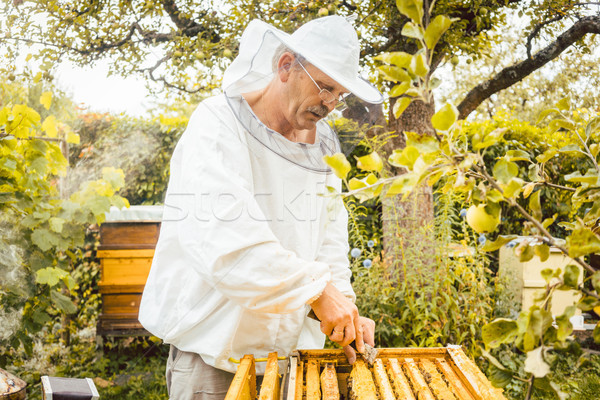 Beekeeper checking his bees Stock photo © Kzenon
