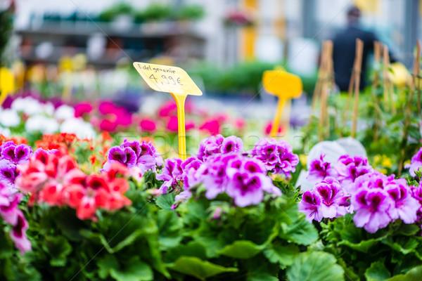 Közelkép piros lila virágok vásár zöld levelek Stock fotó © Kzenon