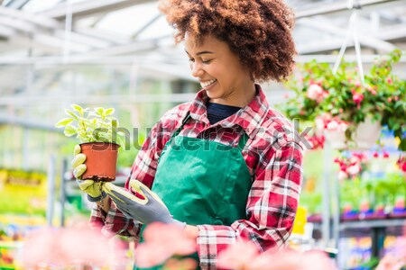 Beautiful young woman watering various potted houseplants for sale Stock photo © Kzenon