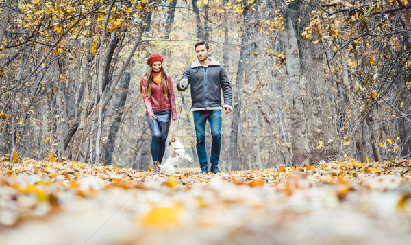 Young couple walking with their dog in a colorful autumn forest Stock photo © Kzenon