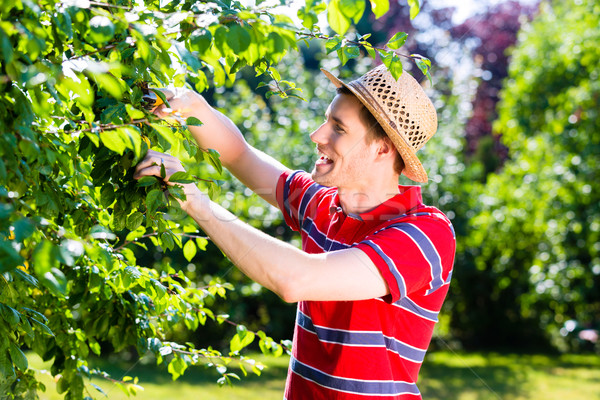 Man pruning tree in orchard garden Stock photo © Kzenon