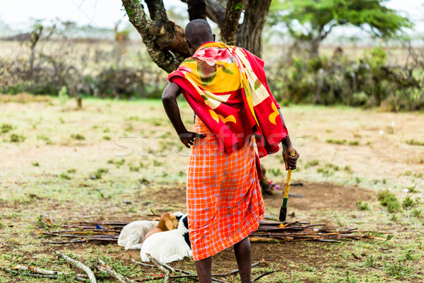 Massai farmer checking on his goats Stock photo © Kzenon