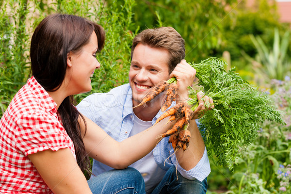 Jardinería verano Pareja cosecha zanahorias feliz Foto stock © Kzenon