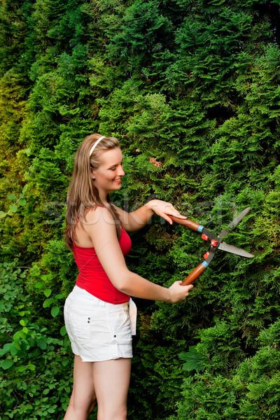 Woman in garden trimming hedge Stock photo © Kzenon