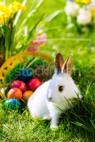 Stock photo: Easter bunny on meadow with basket and eggs