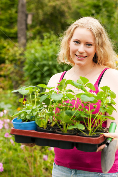 Garden – planting strawberry seedlings Stock photo © Kzenon
