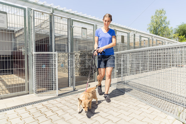 Woman walking a dog in animal shelter Stock photo © Kzenon