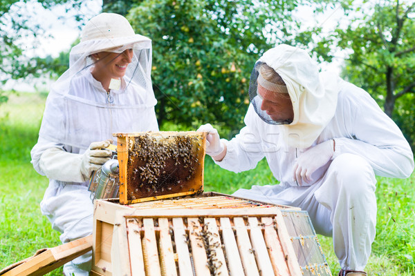 Beekeeper with smoker controlling beeyard and bees  Stock photo © Kzenon