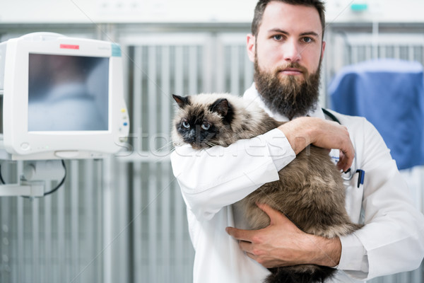 Veterinarian pet doctor holding cat patient in his animal clinic Stock photo © Kzenon