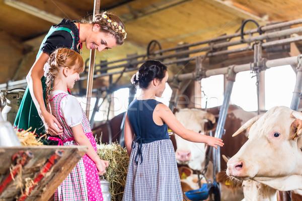 Madre bambini vacche mucca farm Foto d'archivio © Kzenon
