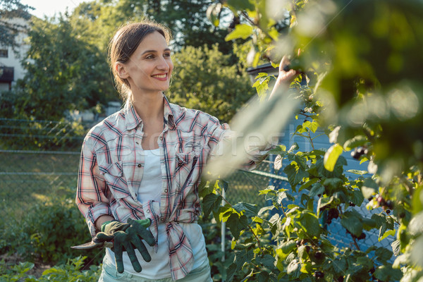 Fiatal nő kertészkedés bogyók bokor nyár munka Stock fotó © Kzenon