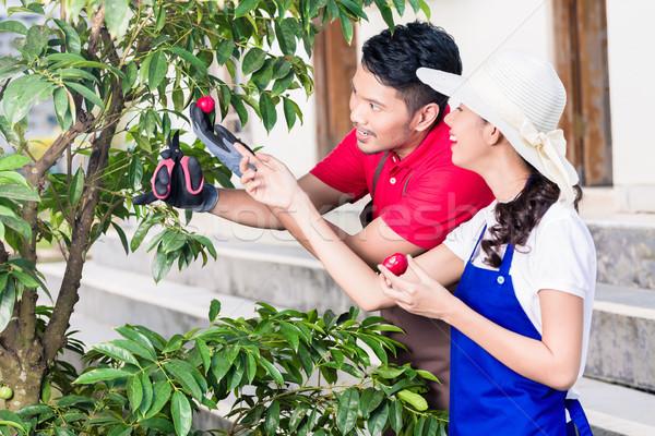 Jeunes asian couple souriant récolte ensemble Photo stock © Kzenon
