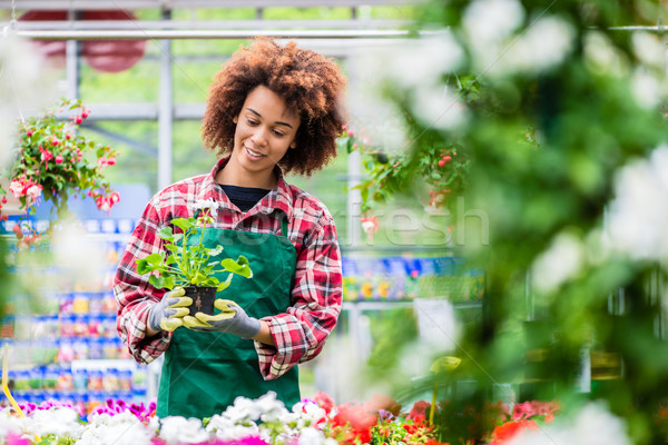 Dedicated woman holding a potted plant during work as florist Stock photo © Kzenon
