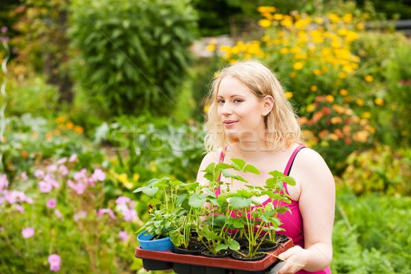 庭園 イチゴ 苗 ガーデニング 小さな ストックフォト © Kzenon