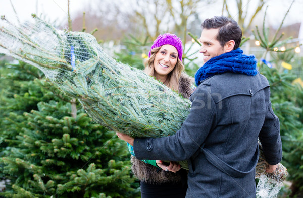 Stock photo: Couple carrying bought Christmas tree