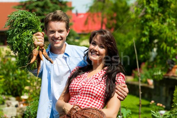 Stockfoto: Tuinieren · zomer · paar · oogst · wortelen · gelukkig