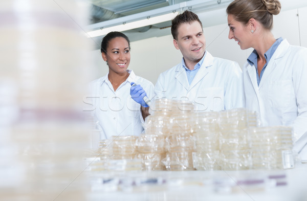 Group of researchers in scientific lab with plates of bacteria Stock photo © Kzenon