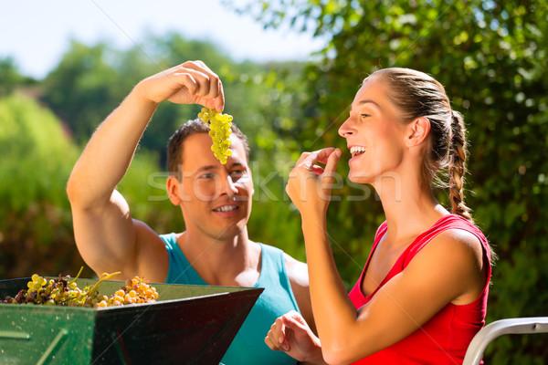Woman and man working with grape harvesting machine Stock photo © Kzenon