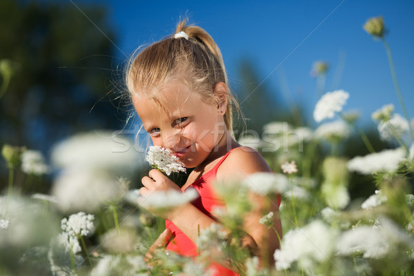 Sniffing the yarrow Stock photo © Kzenon