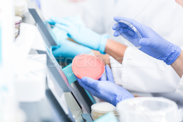 Lab technicians analyzing bacteria cultures in petri plates Stock photo © Kzenon