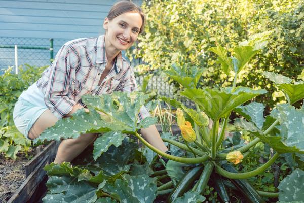 Frau Garten Ernte Gurken Zucchini Gemüse Stock foto © Kzenon