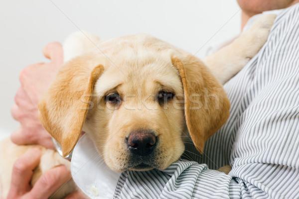 çok güzel köpek köpek yavrusu kol sevimli Stok fotoğraf © Kzenon