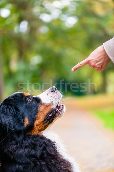 Woman training with dog sit command Stock photo © Kzenon