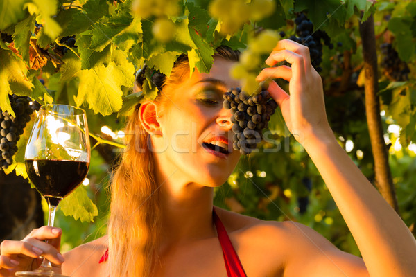 Woman with glass of wine in vineyard Stock photo © Kzenon