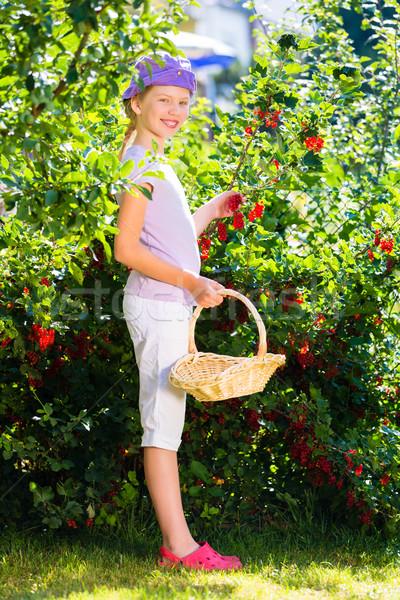 Criança colheita jardim arbusto feliz Foto stock © Kzenon